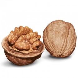 Walnut Flavor Concentrate