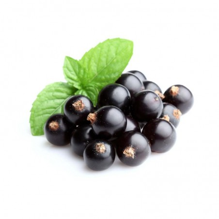 Blackcurrant Flavor Concentrate